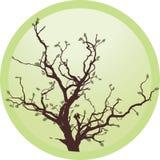 gammal tree vektor illustrationer
