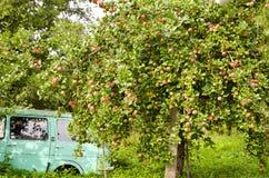 gammal tree för äpplebilträdgård Arkivbild