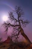 Avlövad tree i Grand County, Utah nära steniga forar Arkivfoto