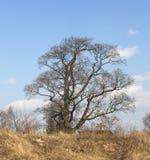 Gammal tree och ett kors royaltyfria foton
