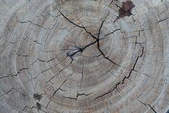 Gammal treestubbetextur arkivfoton
