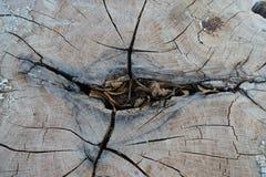 Gammal treestubbetextur royaltyfria foton