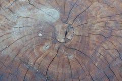 Gammal treestubbetextur arkivfoto