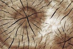 Gammal treetextur Fotografering för Bildbyråer