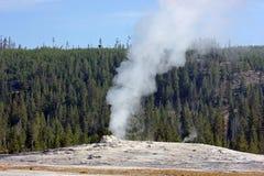 Gammal trogen ` för ` omkring som får utbrott, Yellowstone Royaltyfria Bilder