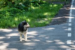 Gammal trogen lurvig hund Stor ledsen ?vergiven hund royaltyfria foton
