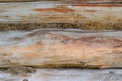 Gammal trävägg för journalhus med mossaisolering Royaltyfria Foton