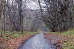 gammal väg Höst Royaltyfri Fotografi