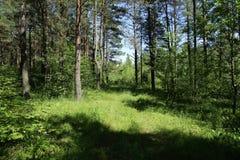 Gammal väg i mitt av en skog i solig dag Royaltyfria Foton