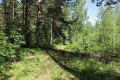 Gammal väg i mitt av en skog i solig dag royaltyfria bilder