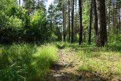 Gammal väg i mitt av en skog i solig dag arkivfoto