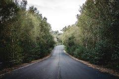 Gammal väg i skogen Arkivbild