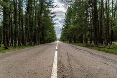 Gammal väg i skogen royaltyfri foto