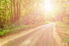 Gammal väg i skogen som är upplyst vid solstrålarna Royaltyfri Foto