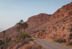 Gammal väg med palmträd på den torra steniga backen i den Sahara öknen i slutet av dagen i solnedgångljus royaltyfri foto