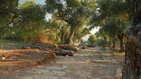 Gammal väg som omges av olivträd Forntida Nysa, Sultanhisar, Turkiet 4K stock video