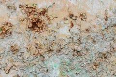 gammal vägg för bakgrund Royaltyfria Bilder