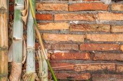 Gammal vägg för bakgrund för bambu för tegelsten Royaltyfri Fotografi