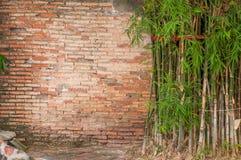 Gammal vägg för bakgrund för bambu för tegelsten Royaltyfri Foto