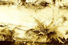 gammal vägg för ferns Royaltyfri Fotografi