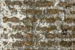 Gammal vägg för röd tegelsten med tjocka lager av ljust vitt cement, fläckar av smuts, formen och grön mossa ungefärlig textur un arkivbilder