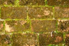 Gammal vägg för röd tegelsten som är fullvuxen med gräs och mossa Arkivbilder