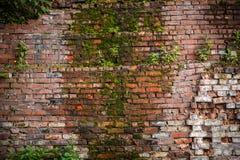 gammal vägg för tegelsten fotografering för bildbyråer