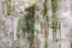Gammal vägg som täckas med mossa och formen arkivfoton