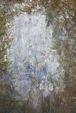 Gammal vägg som täckas med mossa och formen royaltyfri fotografi