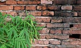 Gammal väggtegelsten knäcker och retro bakgrund för bambubladkonst Fotografering för Bildbyråer