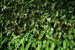 Gammal väggtegelsten med mossa och ormbunken Arkivfoto