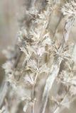 gammal växt Royaltyfri Fotografi