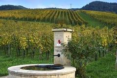 Gammal vattenspringbrunn i en vingård i Tyskland Royaltyfri Foto