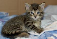 gammal vecka för fyra kattunge arkivbilder