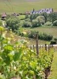 gammal vingård Arkivfoton