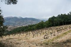 Gammal vingård på bakgrund av berg Fotografering för Bildbyråer