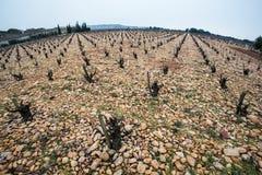 Gammal vingård på stenig jordning Royaltyfri Foto