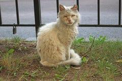 Gammal vit katt på gräsmattan arkivfoto