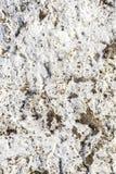 Gammal vit knäckt cementbetongbakgrund Fotografering för Bildbyråer