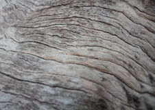Gammal wood abstractbackground i Thailand Royaltyfri Foto