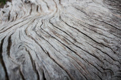 Gammal wood abstractbackground i Thailand Royaltyfria Foton