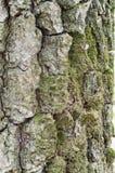 Gammal Wood modell för trädtexturbakgrund Arkivfoton