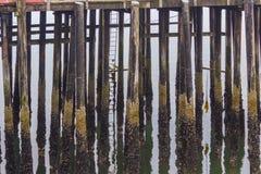 Gammal Wood skeppsdocka och reflexion arkivfoto