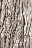 Gammal wood textur Royaltyfri Fotografi