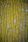 Gammal wood textur i guling och naturlig färg för greedn Royaltyfri Fotografi