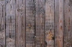 Gammal wood textur med fnuren Arkivfoto