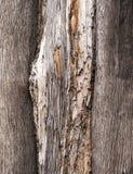 Gammal Wood trädtexturbakgrund Royaltyfria Foton