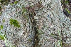 Gammal Wood tr?dtexturbakgrund royaltyfria bilder