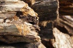 Gammal wood vedträbakgrund Royaltyfria Foton