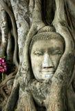 gammala buddha Royaltyfri Foto